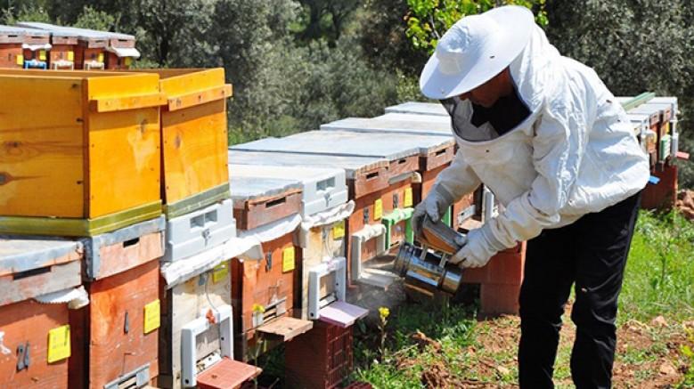'Devlet, arı zehri konusunda; seminer versin ve pazar oluştursun'