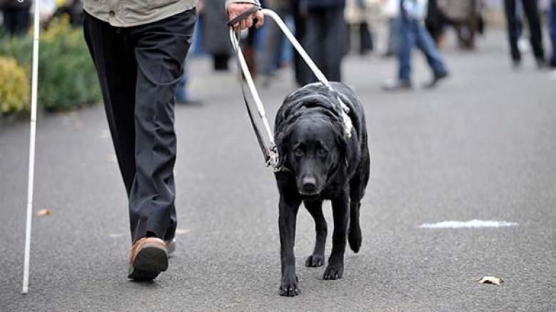 Rehber köpekler, görme engelli sahipleriyle konser izleyebilecek