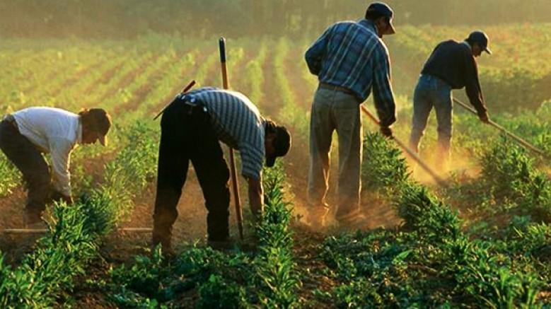 Tarım sektöründe, takipteki kredi miktarı; 4.3 milyar TL'ye yükseldi