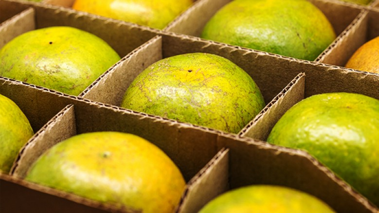 'Yüzde 100 Gıda Güvenliği' sürdürülebilir gelecek için en önemli adımlardan biri'